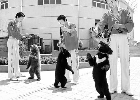 太原动物园 仨熊挥汗备战首届动物运动会