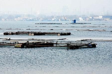 南京市治理玄武湖
