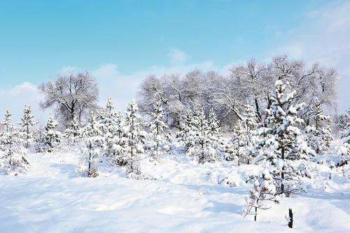 山中春日飘雪 陌上连翘花开