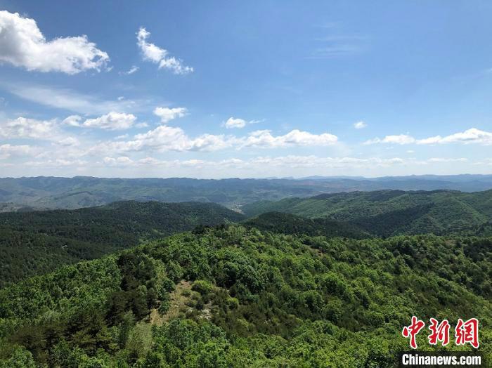 重塑河山 天然林保护工程为山西筑起生态屏障