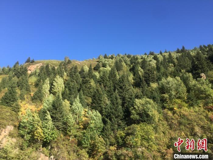 """""""山西全面推行林长制 保护森林资源"""