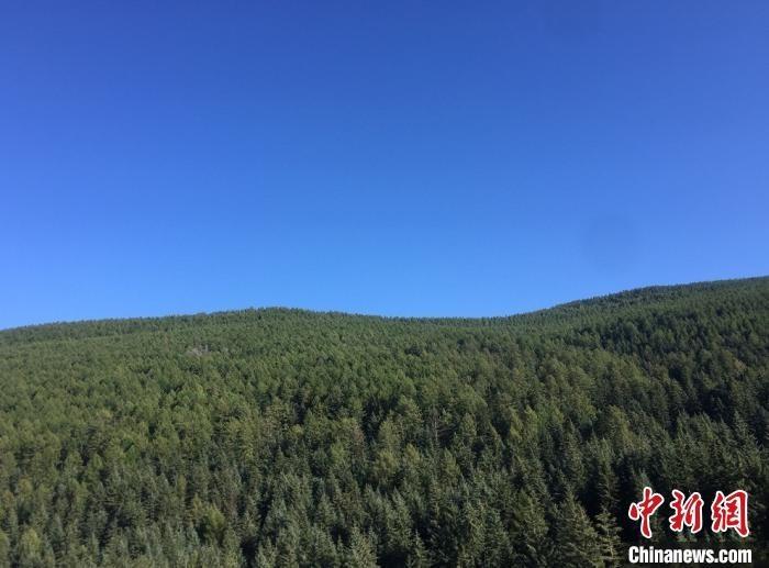 山西今年已完成黄河防护林带建设282余万亩