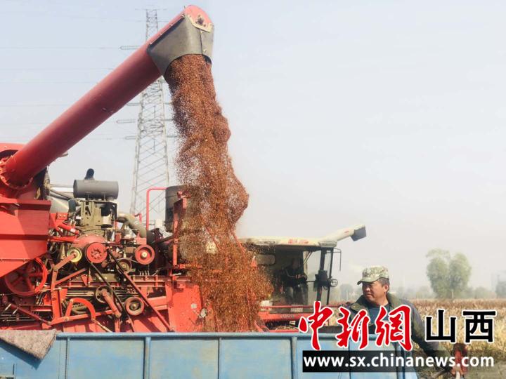 山西清徐高粱丰收 联合社引领助农增收