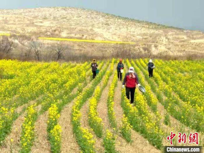 """山西潞城的致富""""秘笈"""":特色农业让村民钱包""""鼓起来"""""""