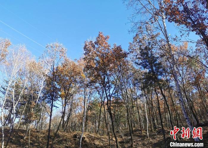 山西开展为期一年专项行动 整治涉林草违法