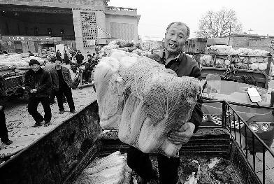 由省商务厅组织的我省大白菜主产区产销对接现场会在清徐县